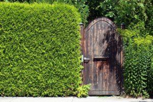 Hecke als Trennwand im Garten